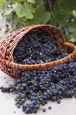 Baskets with nature grapes — Stock Photo