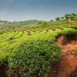 Stock Photo: Plantations of Dadugangxiang