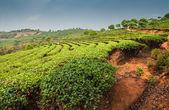 Plantations of Dadugangxiang — Stock Photo