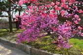 Spring in Seoul parks — Stock Photo