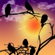 Stock Photo: Birds silhouette sitting on branch at sunset