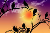 Birds silhouette sitting on a branch at sunset — Stock Photo