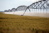 Wheat irrigation — Stockfoto