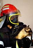 Fire fighter saving cat — Stock Photo