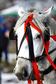 White horse, red ribbons — Stockfoto