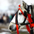 White horse, red ribbons - Stock Photo