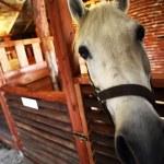 Horse — Stock Photo #24084571