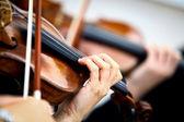 Playing violin — Stock Photo