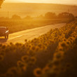 Car at sunset — Stock Photo