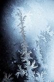 Flores de geladas — Foto Stock