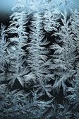Icy flowers — Stock Photo