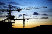 Cranes at dusk — Stock Photo