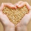 Heart shape from wheat — Stock Photo