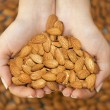 Almond in hands shaping heart — Foto Stock