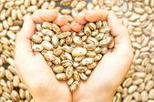 Krásné fazole — Stock fotografie