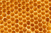 Unfinished honeycombs — Stock Photo