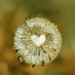 Dried with love — Stockfoto