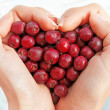 Haws in heart shap hands — Stockfoto #22176447
