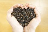 Krásné černé jasmínová rýže — Stock fotografie
