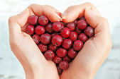 Haws in heart shap hands — Stockfoto