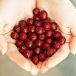 Red haws in hands — Foto Stock