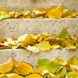 Stockfoto: Autumn leaves on stairs