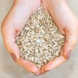 Sunflower seeds in hands — Foto Stock