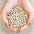Sunflower seeds in hands — Stockfoto