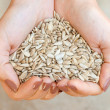 Stock Photo: Lovely sunflower seeds
