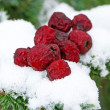 Stock Photo: Dry haw on snow