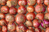 Red onions — Stock Photo