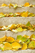 Autumn leaves on stairs — Stock Photo