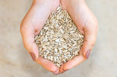 Sunflower seeds in hands — Stock Photo