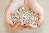 Belle semi di girasole — Foto Stock