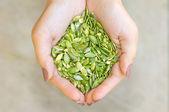 Dýňová semínka v rukou — Stock fotografie