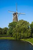 голландская мельница — Стоковое фото
