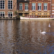 Swan swimming with canal boat in the background — Stock Photo