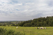 Belgian Ardennes countryside — Stock Photo