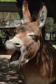 Donkey Closeup — Stock Photo