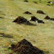 Stock Photo: Mole mound