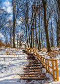 Stairs in winter — Stock Photo