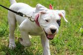 Happy puppy — Stock Photo