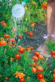 Žena zalévat květiny v zahradě — Stock fotografie