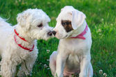 Dog friendship — Stock Photo