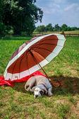 Pes na dovolené — Stock fotografie