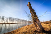 Felled tree by the river — Stok fotoğraf