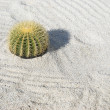 Stock Photo: Golden Barrel Cactus