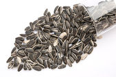 Sunflower seed pour out from a glass cup — Stock Photo