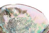 Concha abalone dentro — Fotografia Stock