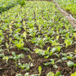 Stock Photo: Vegetable seedlings